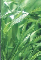 Ocean Grown Plant Nutrient: OceanGrown, Ocean Solution, organic, plant growth, greenhouse, hydroponics, nutrients, soil, fertilizer, orchards, pastures, plant yields, harvest, crops, aerobic bacteria
